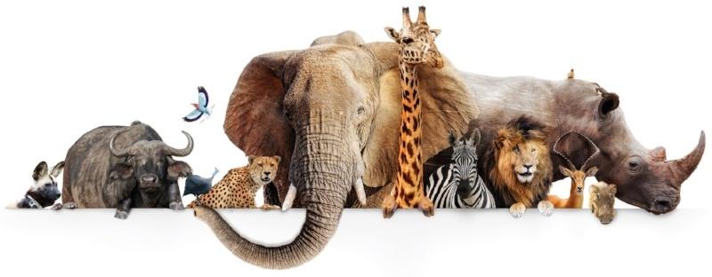 zoo animals PETA lawsuit